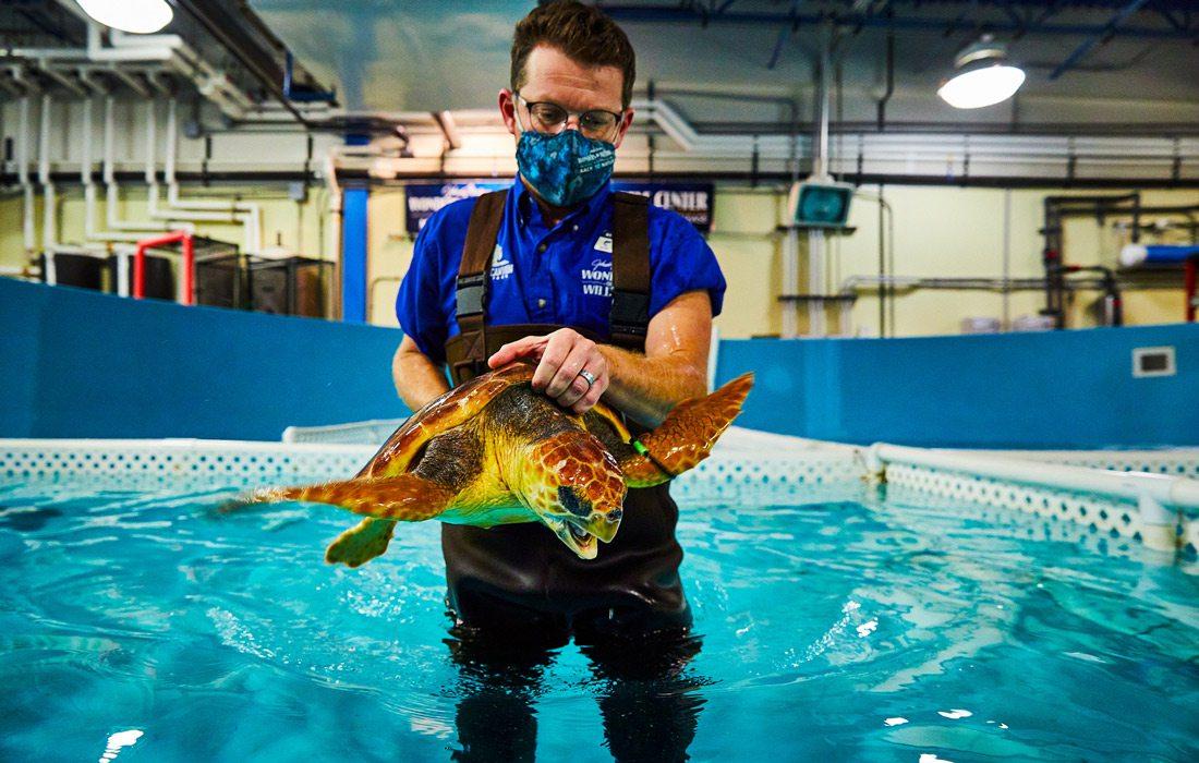Sea turtle rehab at indoor pool