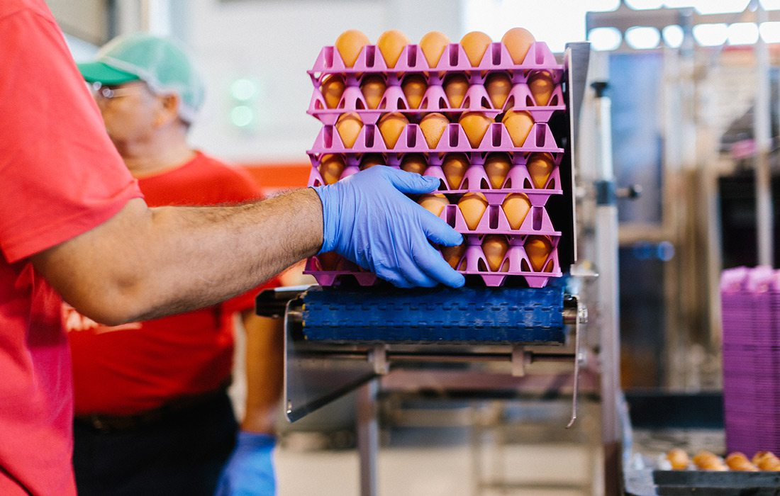 Egg production at Vital Farms