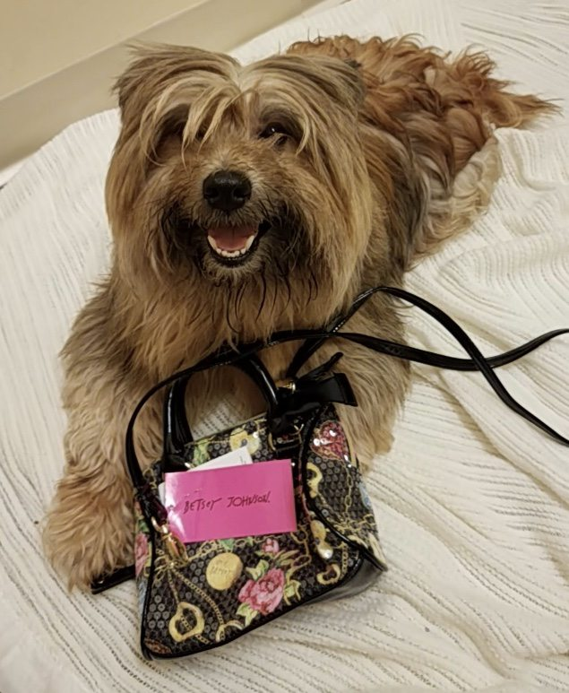 Annual Pooches, Purses and Party Fundraiser for Shepherd of the Hills Humane Society
