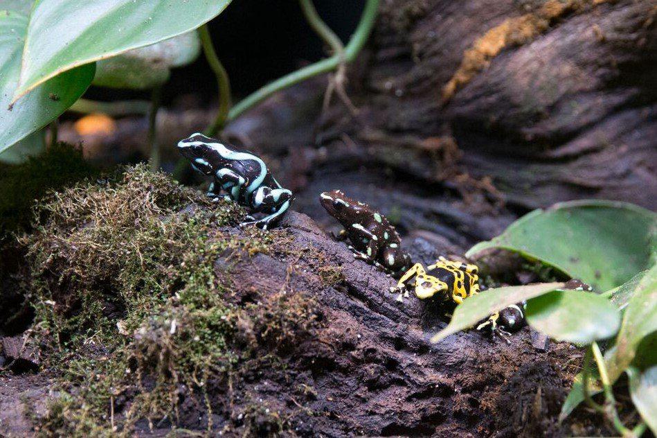 Wonders of Wildlife Educational Event