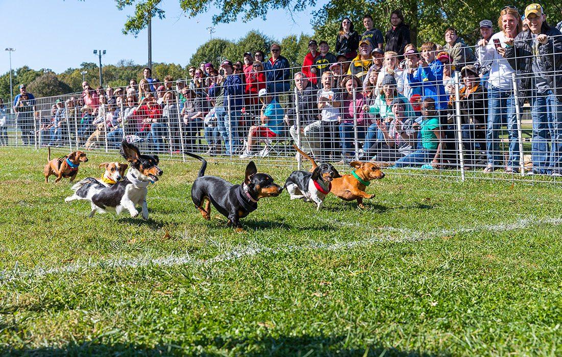 Dog race at fall festival