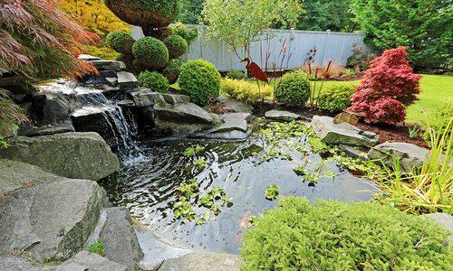 Backyard water garden with koi fish