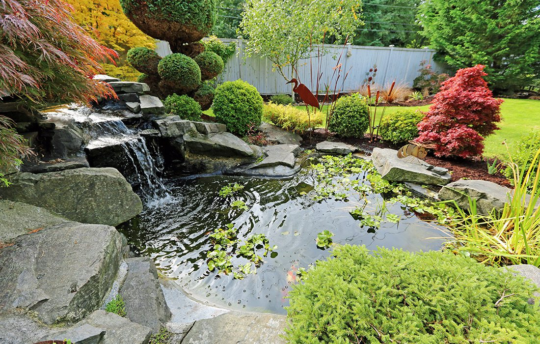 Backyard water garden with koi fish