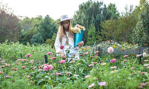 Blossom Thyme Hill Flower Farm photo