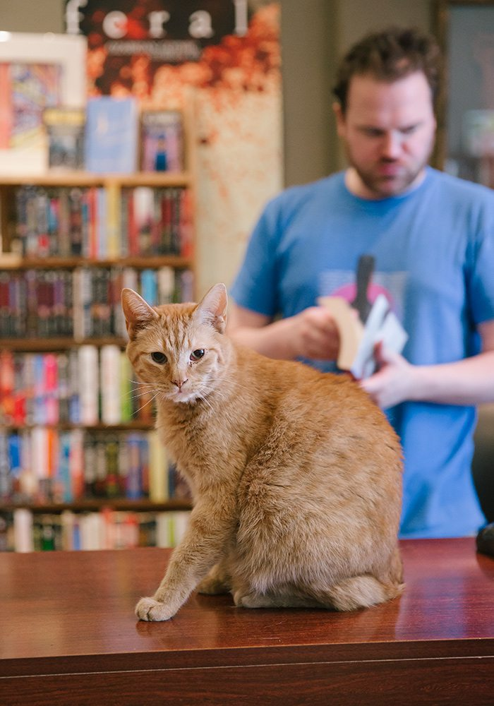 Googey the cat at BookMarx in Springfield, MO.