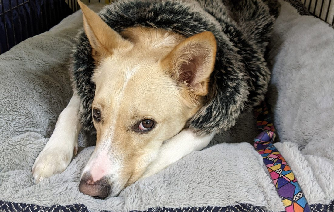 Dog at the warming shelter at Brentwood Center