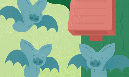 Bring Down Mosquitos With a Bat House