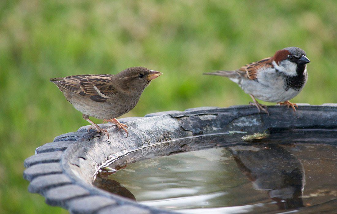 Build a Birdbath