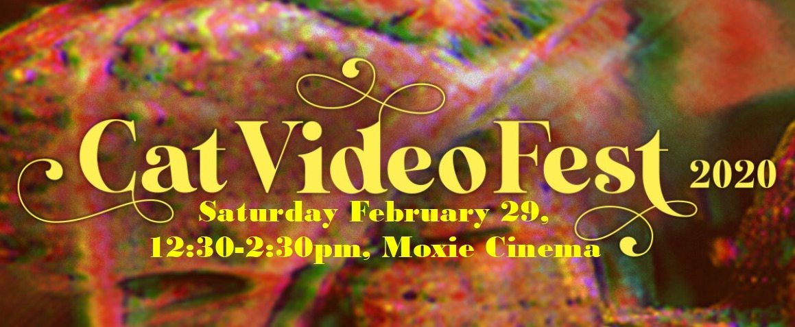 CatVideoFest in Springfield, MO