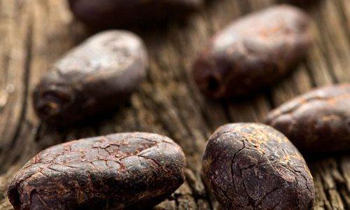 Chocolate Unites Cultures