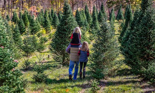 Christmas Trees, Southwest Missouri