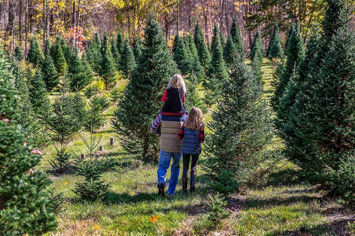 Christmas Trees, Southwest Missouri