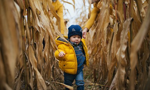 Little boy running through corn maze
