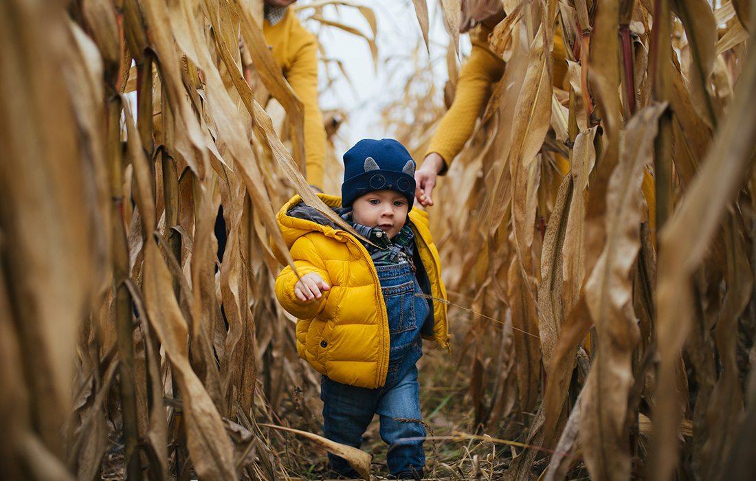 Little boy running through corn maze
