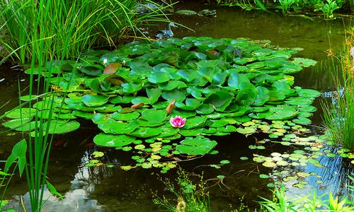 D.I.Y. Water Gardens