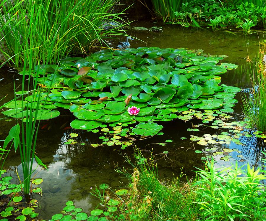 D.I.Y Water Gardens