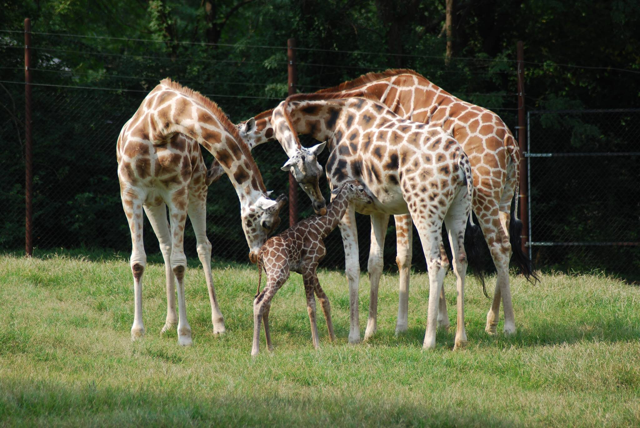 National Zoo Lovers Day at Dickerson Park Zoo