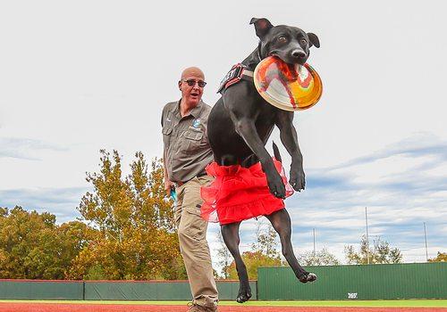 Diskey the Wonder Dog