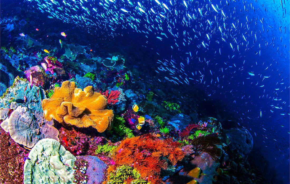 Coral reefs and tropical fish