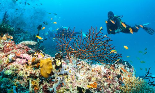 Scuba diver inspecting tropical fish and coral reefs
