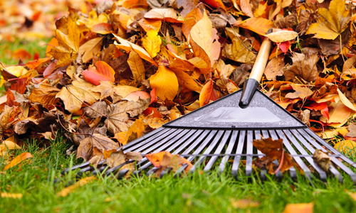 What to do With Your Leaves in Fall