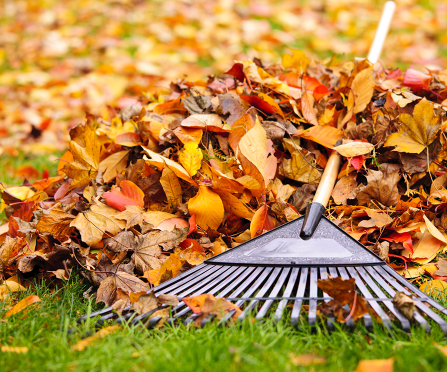 This fall, don't let leaves destroy your yard.