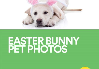 Easter Bunny Pet Photo Night At Battlefield Mall