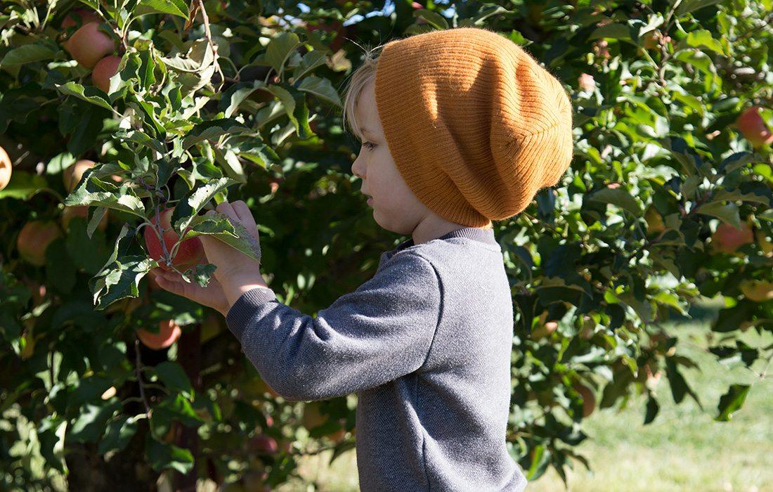 little boy picking apples