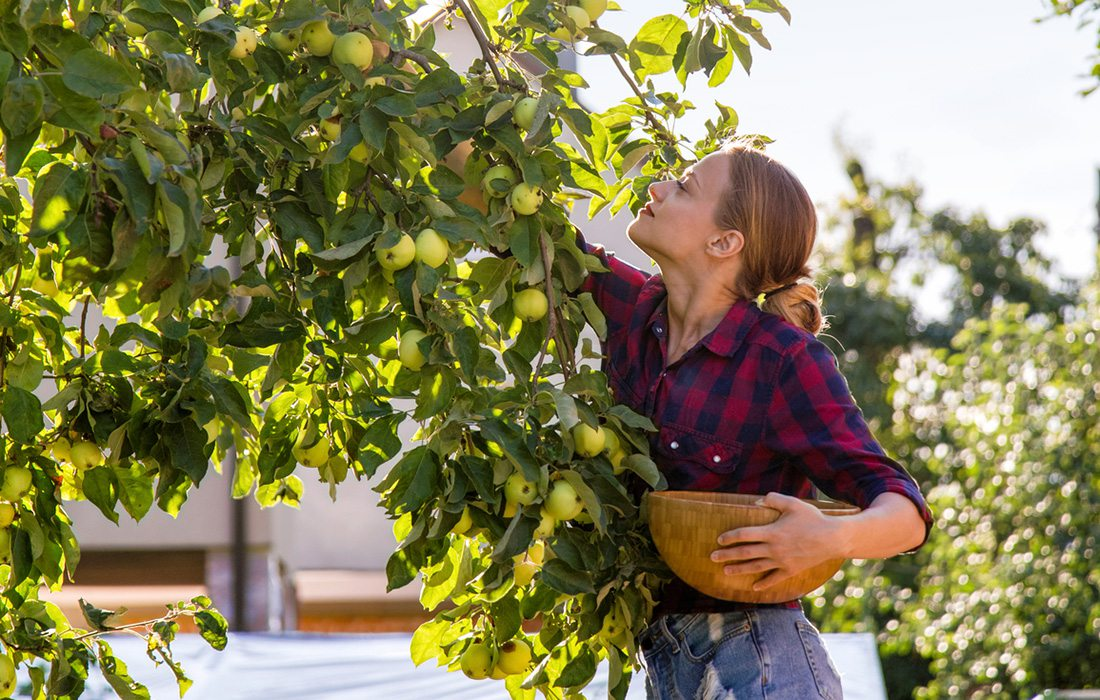 woman in plaid shirt picking apples