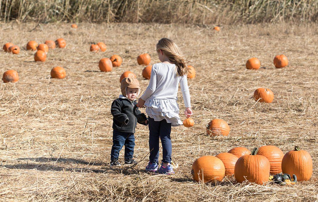 kids at a pumpkin patch