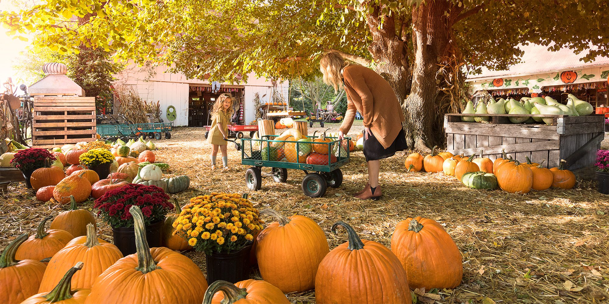 the ultimate guide to fall fun in southwest missouri