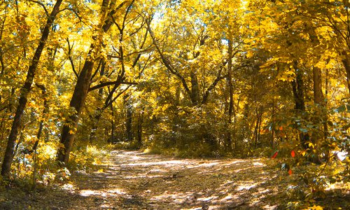 Fall foliage along the Yellow Trail in Busiek State Park in Missouri