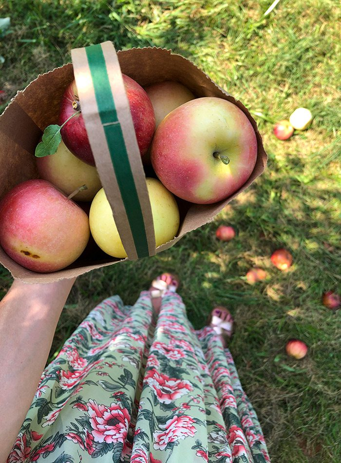 A bag of apples from Sunshine Valley Farmstand