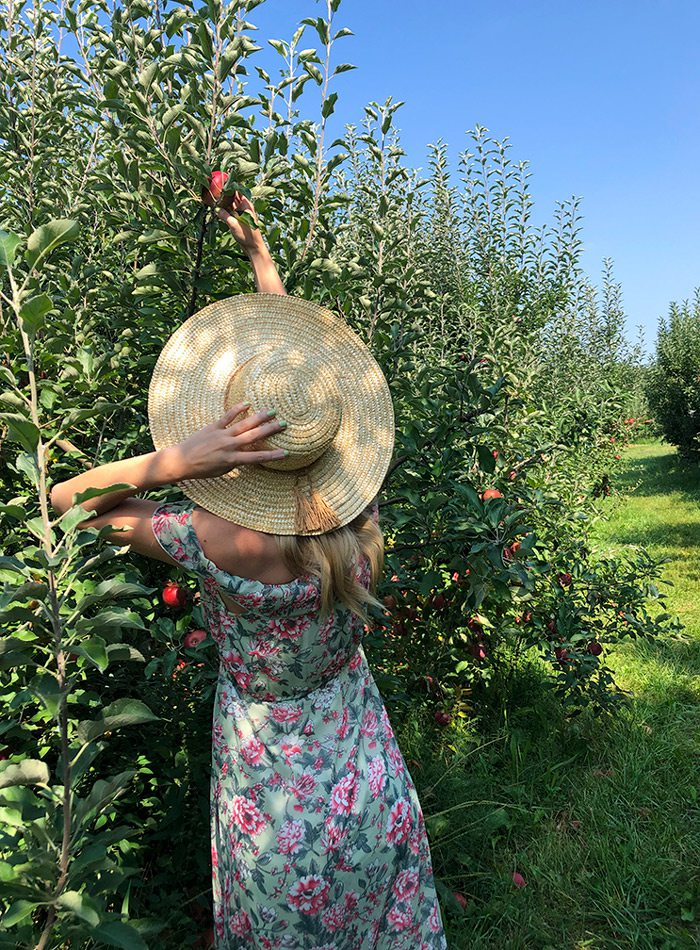 Heather Kane picking an apple at Sunshine Valley Farmstand