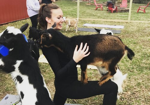 Goats and Yoga
