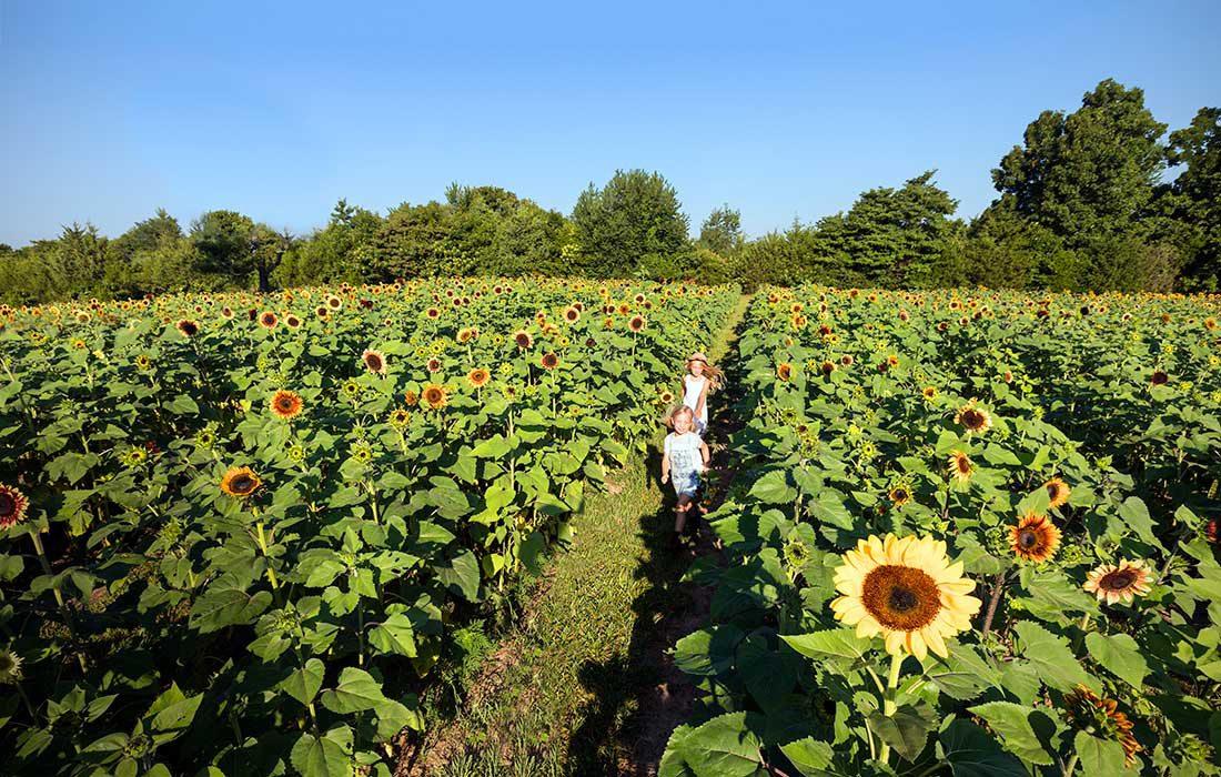 kids in a sunflower field