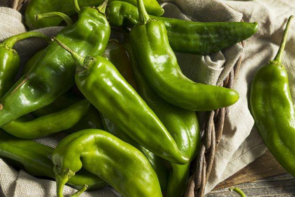 Green chilis stock image