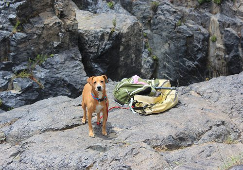 Hike with Adoptable Pups and 37 North Expeditions