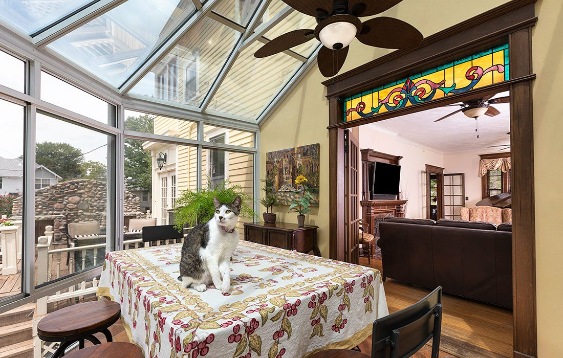 cat in a solarium sunroom