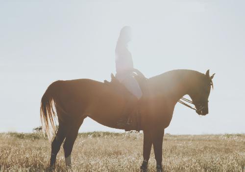 Horseback Riding & Distillery