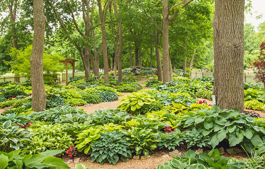 Hosta Garden by Aaron J. Scott