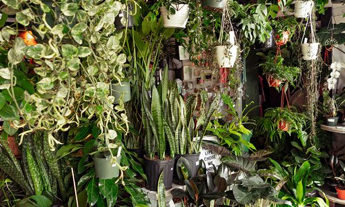 Plant room interior photo.