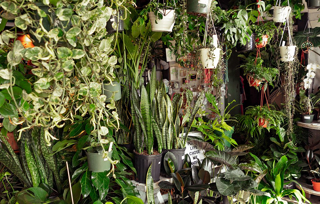 Plants at the Plant Room