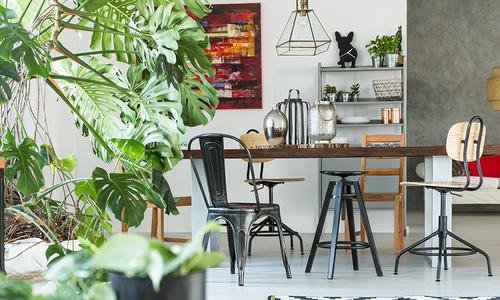 The Best Plants for Indoor Gardening