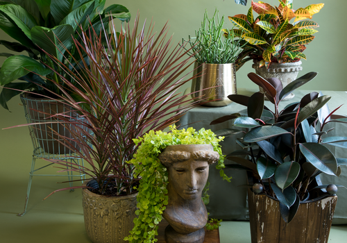 Liven Up Your Space with Indoor Plants