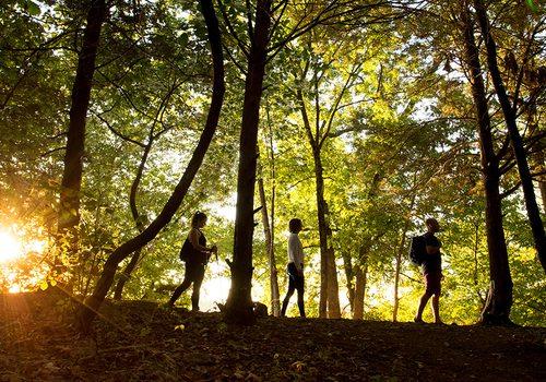 Three people walking a trail at Lake Springfield