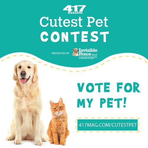 Cutest Pet 2020 Instagram post golden and cat