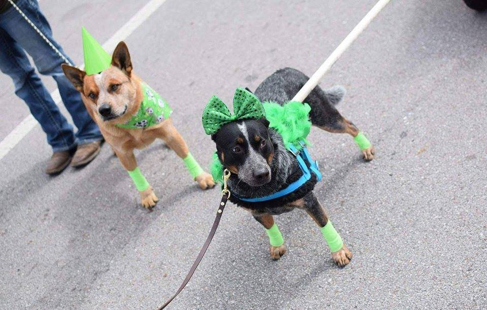 Irish Pet Contest on St. Patrick's Day