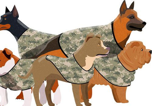 dogs in camo