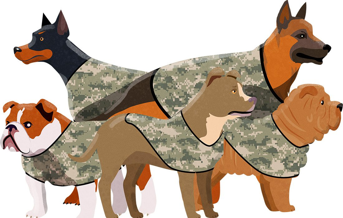 dogs in camouflage